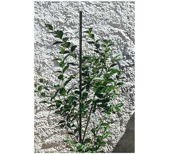 windhager-pflanzstab-stahl-16-x-1800-mm-gruen-p1018